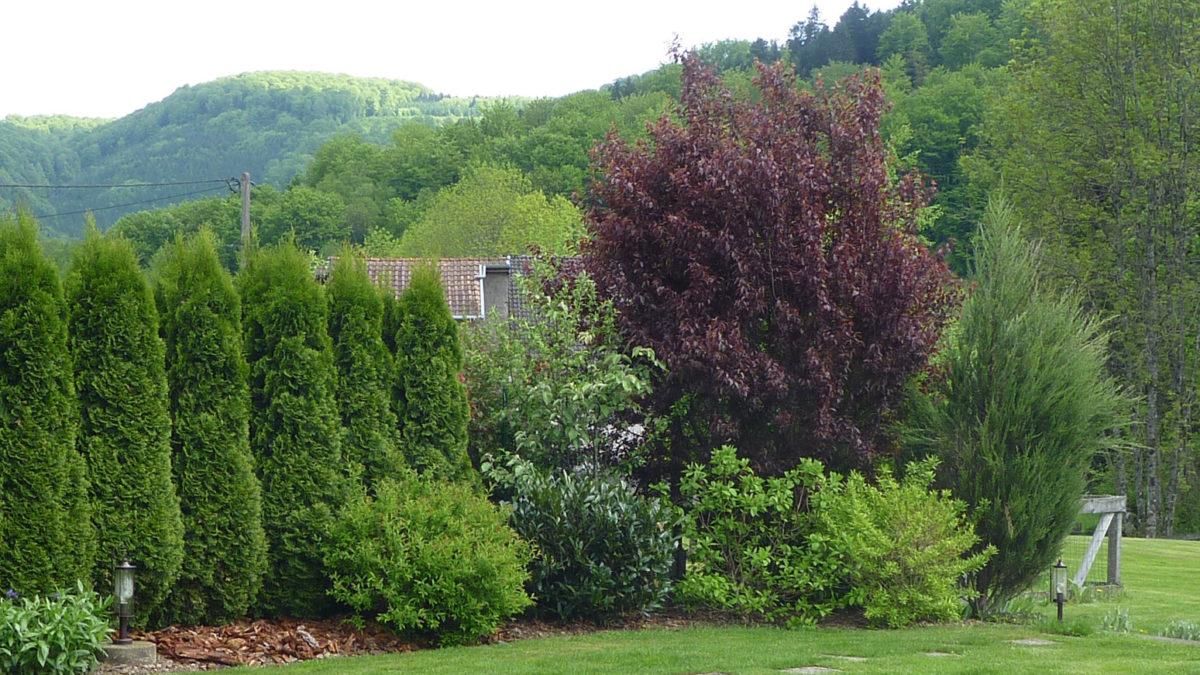 Haie vive maison individuelle, Haute-Saône (70)