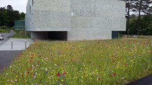 Prairie fleurie à Belfort (90)